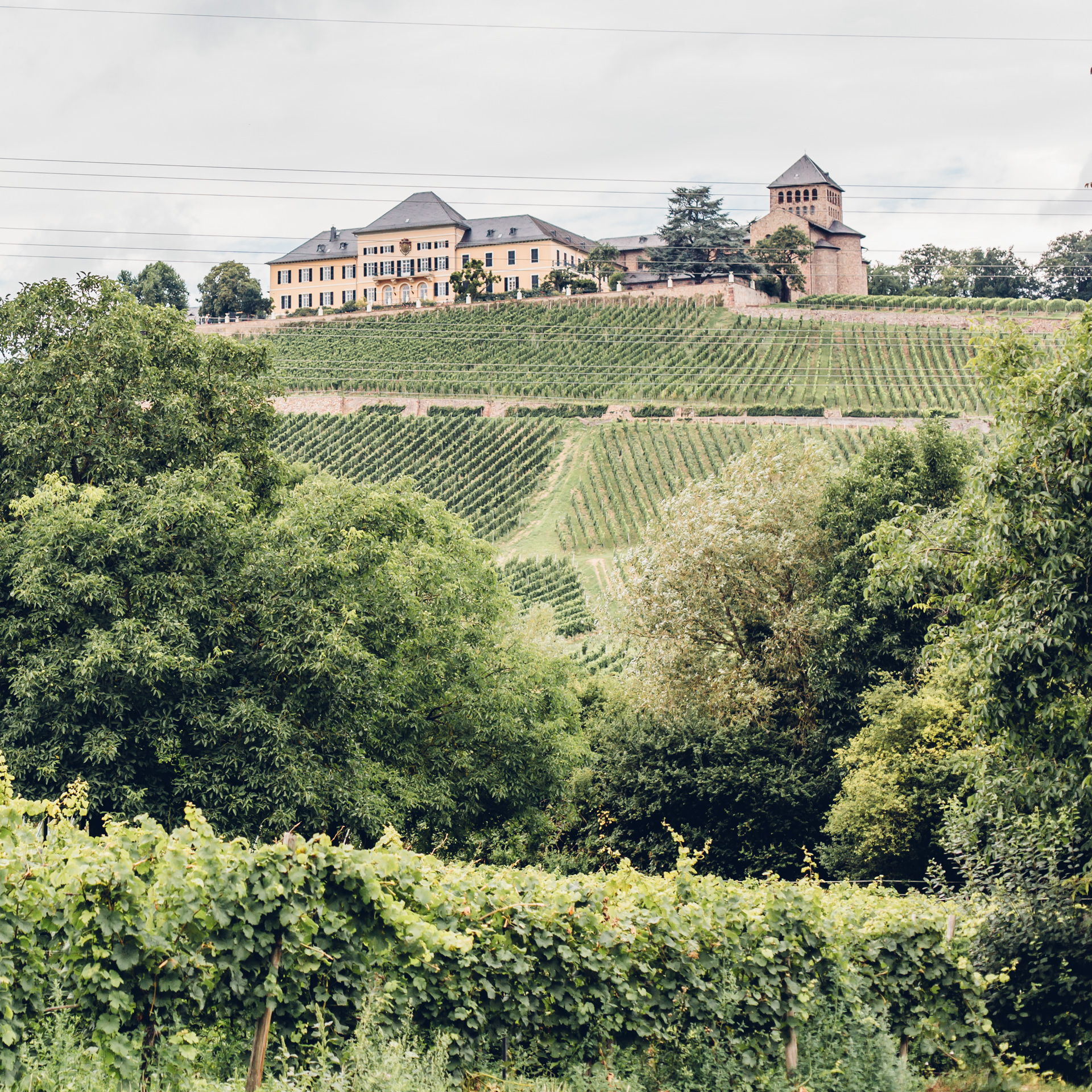 Weingut Ankermühle Rheingau